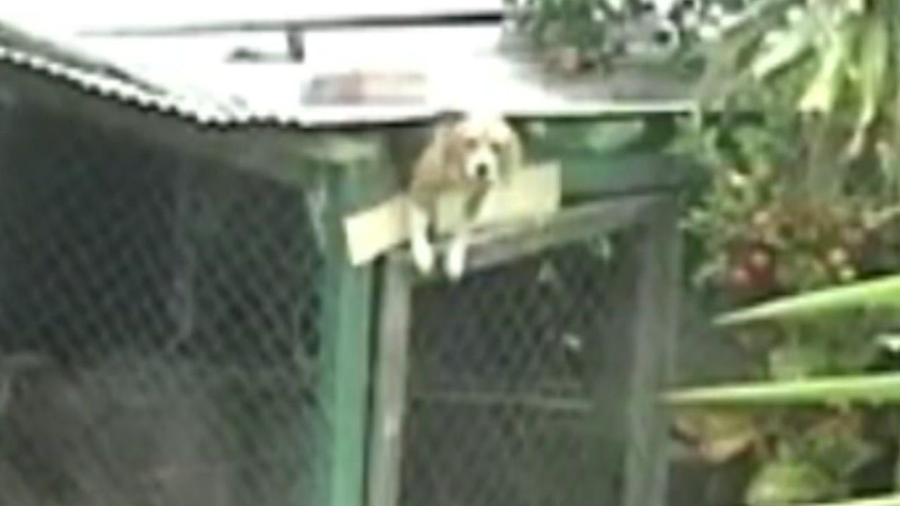 '쇼생크 탈출'...극적으로 우리를 탈출한 강아지