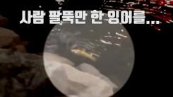 [자막뉴스] 부산 도심 하천서 사냥하는 수달 포착