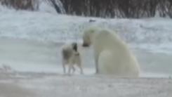 썰매 개와 친구가 되고 싶은 북극곰