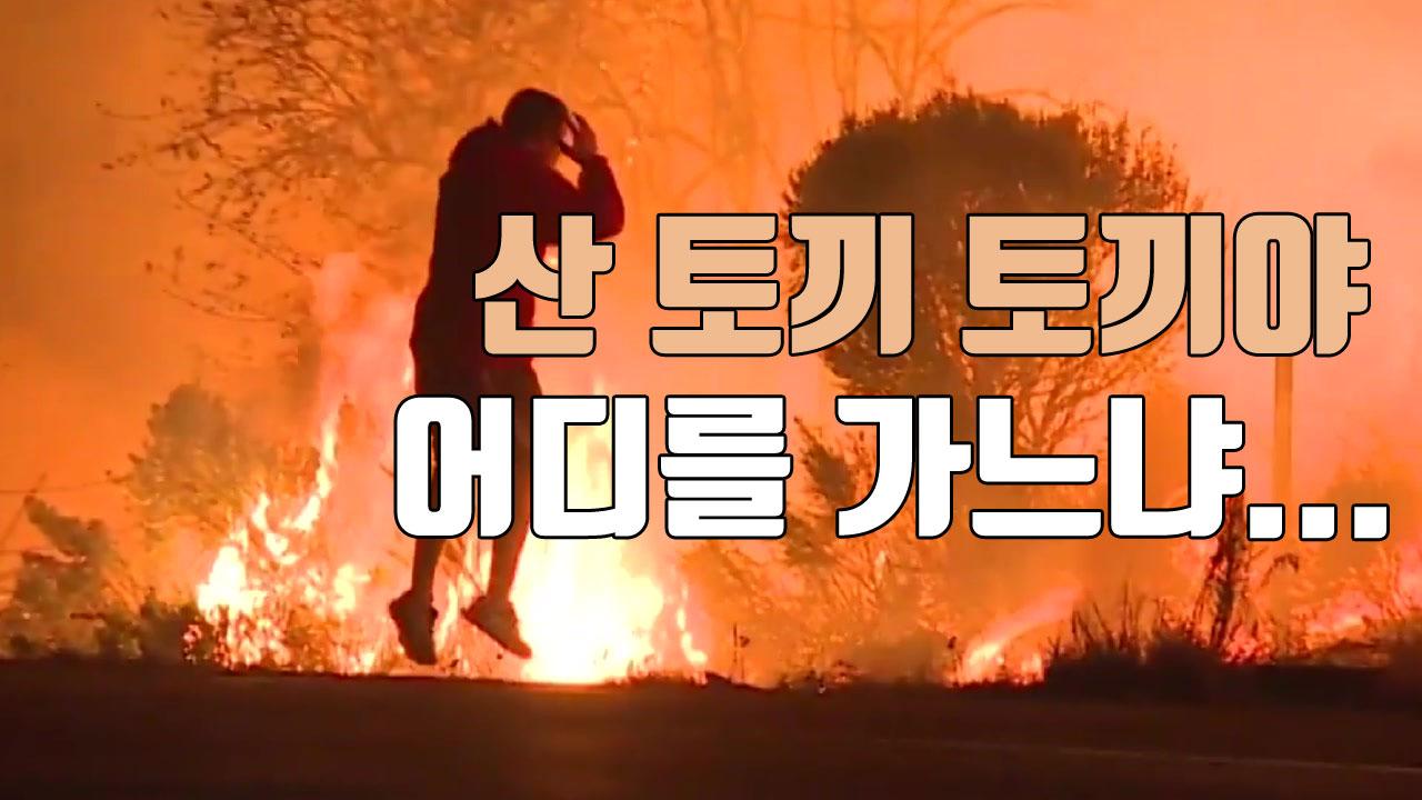 [자막뉴스] 초대형 산불 속에서 청년이 구한 생명