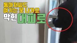 [자막뉴스] '통아저씨도 여기는 못 나가요'...막혀버린 호텔 대피로