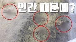 [자막뉴스] 다리 밑으로 뛰어든 사슴, '인간' 때문에?