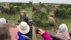 당당하던 새끼 코끼리의 귀여운 반전