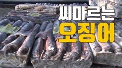 """[자막뉴스] 씨마르는 오징어...""""中 어선 남획 때문"""""""
