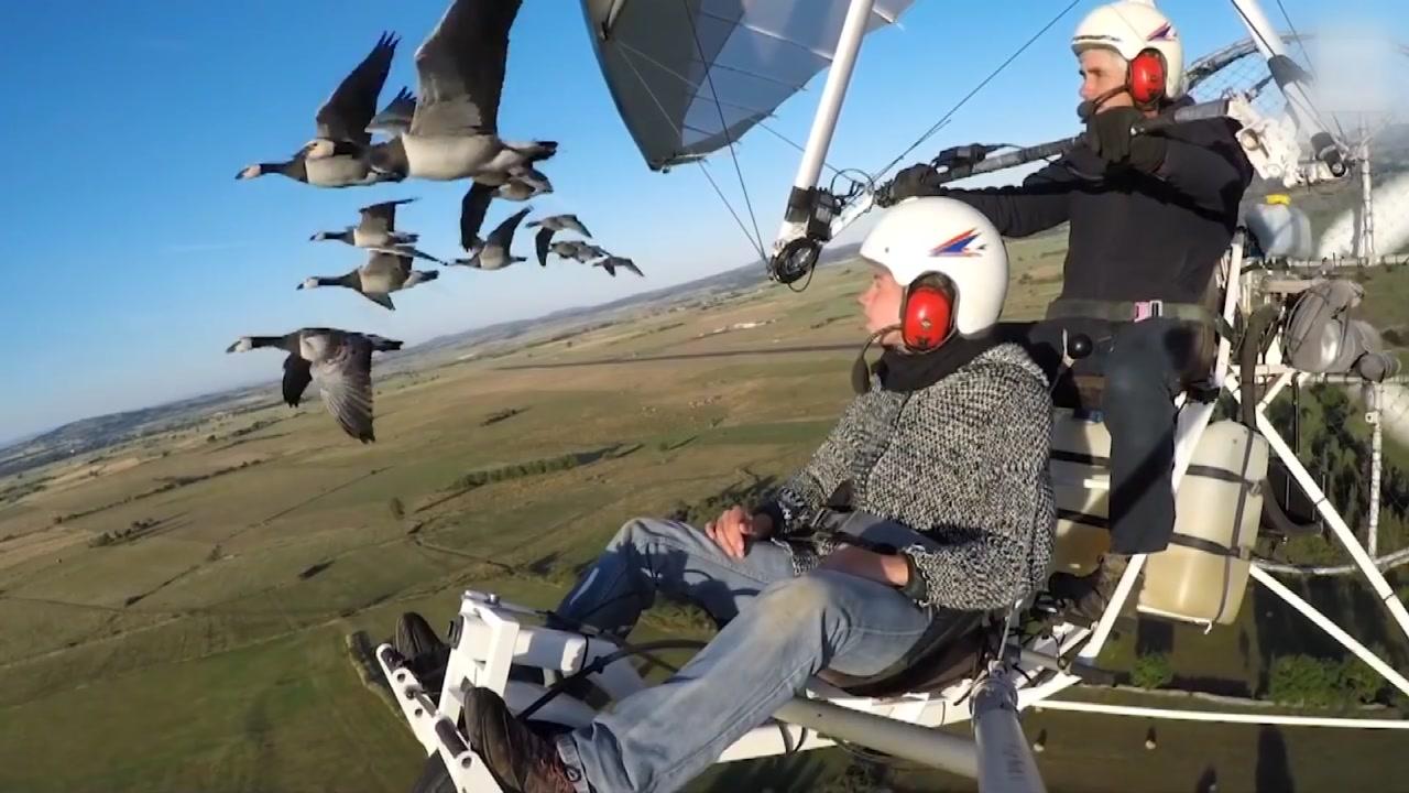 [영상] 새 떼와 함께하는 영화같은 비행