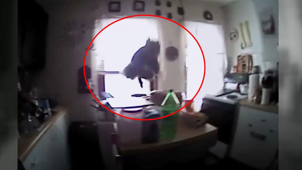 '도둑 잡아라'...부엌에 침입한 다람쥐 검거 작전