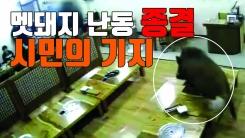 [자막뉴스] 멧돼지 난동 종결시킨 '시민의 기지'