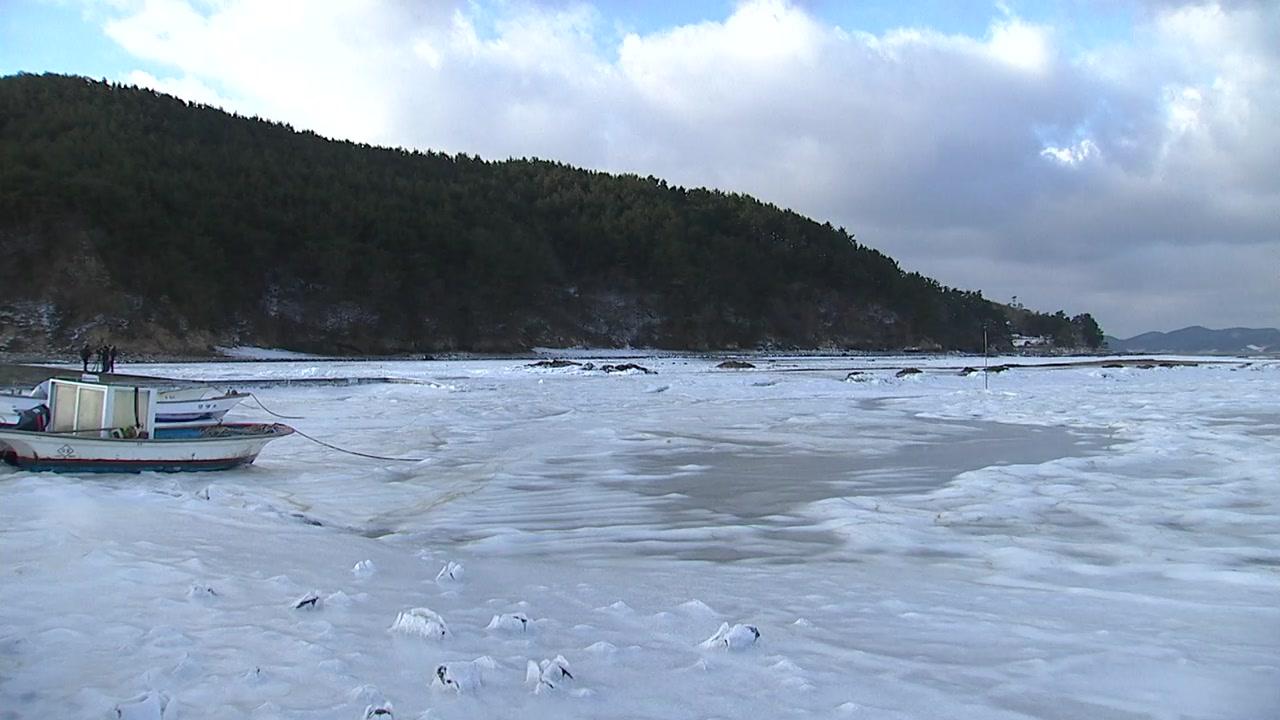 [영상] 최강 한파에 또다시 얼어버린 바다