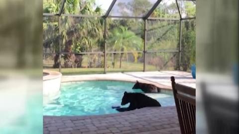 뒷마당에서 곰 두 마리가 놀고 있다면?
