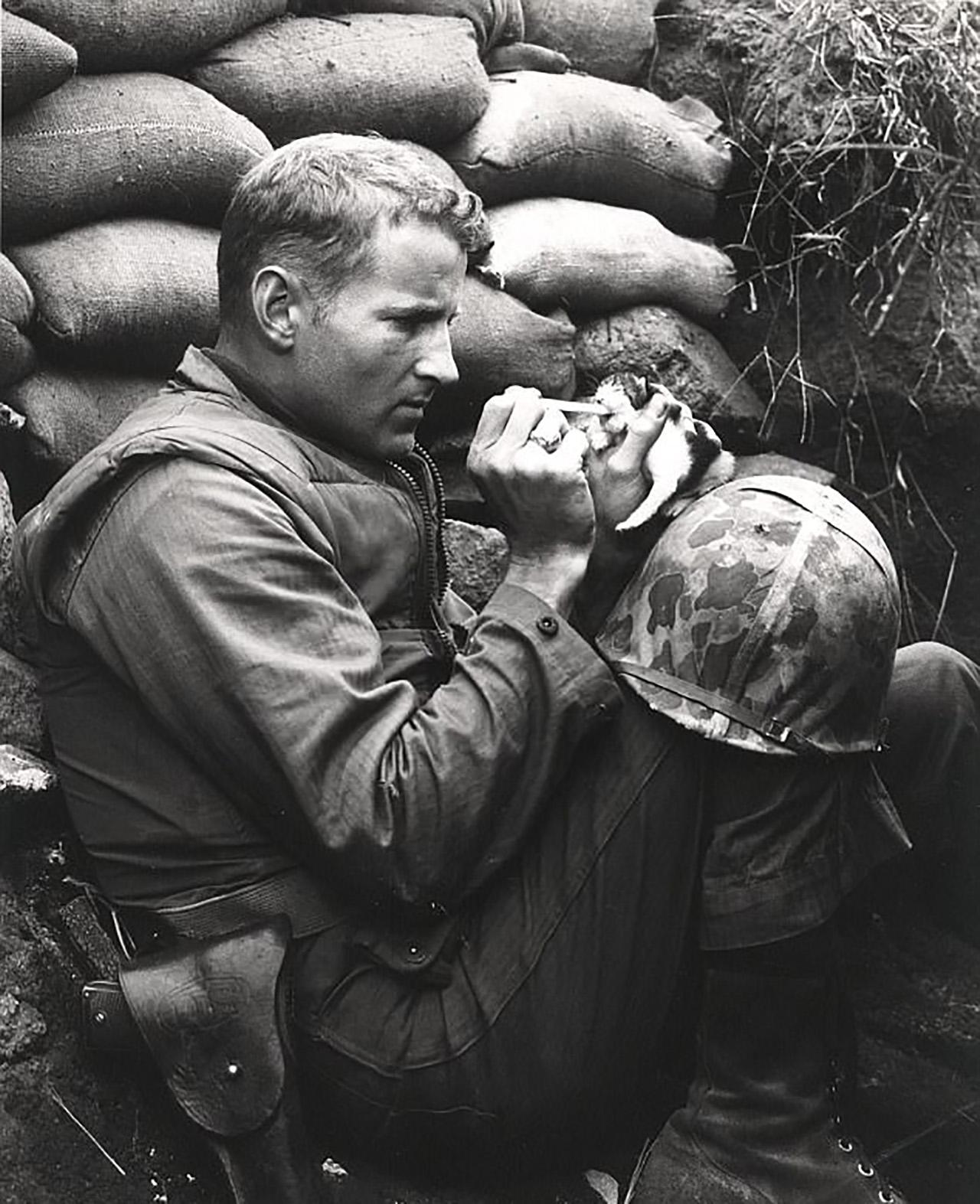6·25 전쟁 당시 새끼 고양이에게 우유 ..