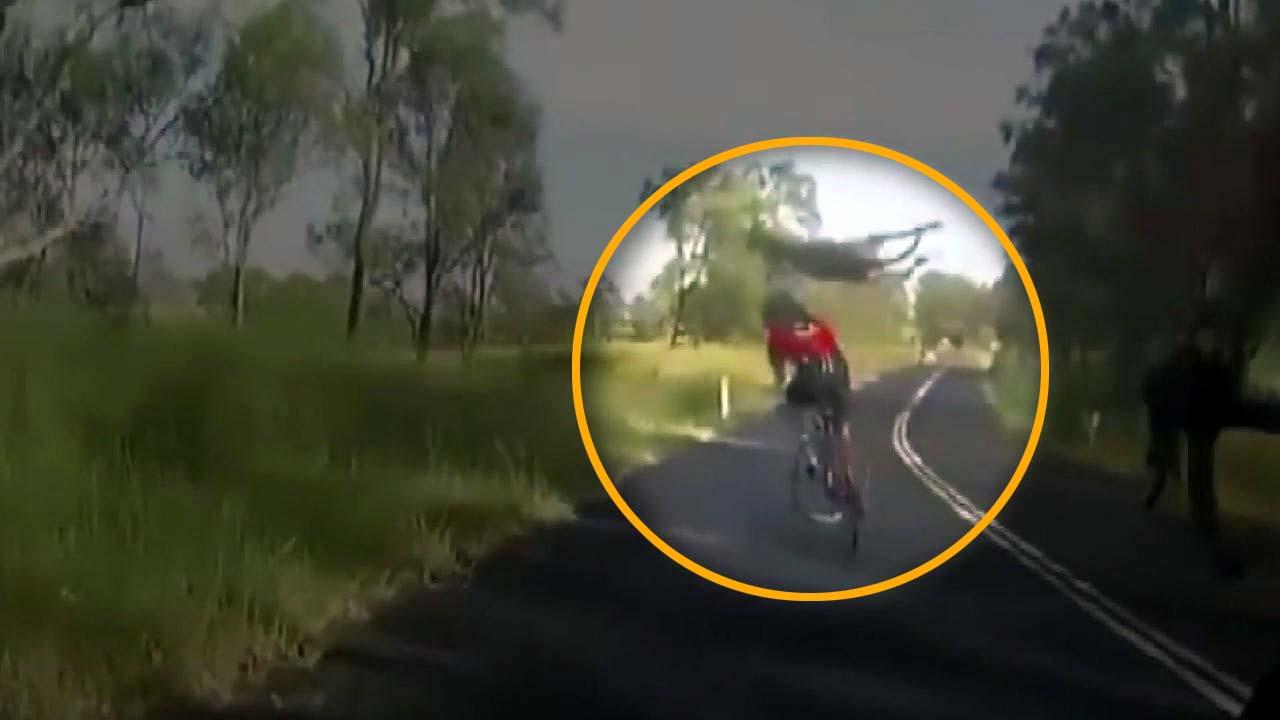 [지구촌생생영상] 호주서는 일상...갑자기 도로에 뛰어든 캥거루