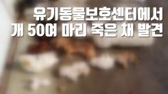 [자막뉴스] 유기동물보호센터에서 죽은 개 50여 마리 발견