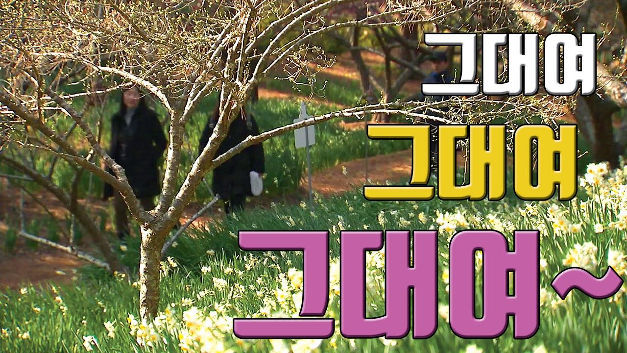 [자막뉴스] 벌써 찾아온 봄...꽃 싹트는 제주!