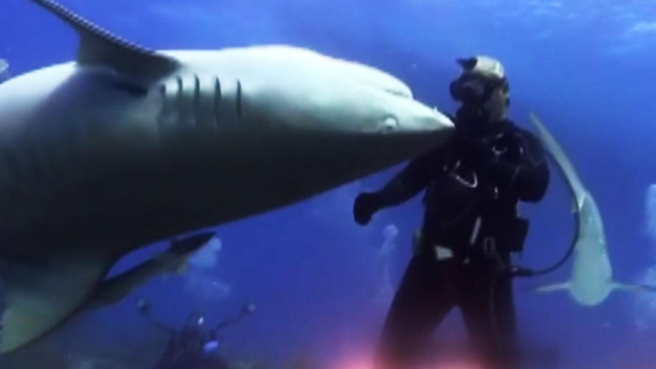 난폭한 317kg 거대 상어를 길들인 방법
