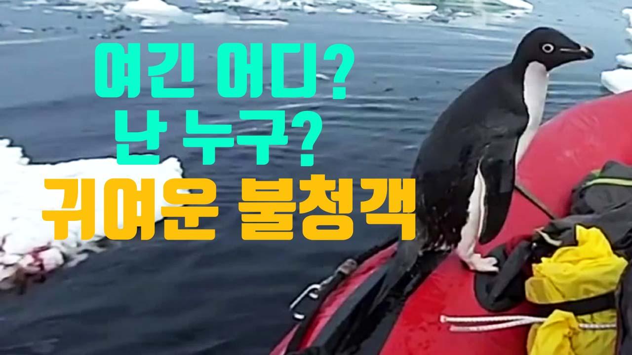 [자막뉴스] 지루했던 항해...귀여운 불청객의 등장