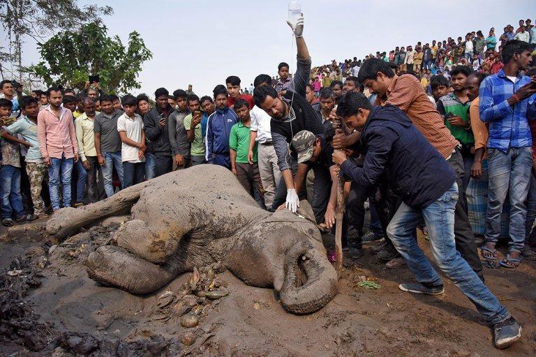 코끼리 다섯 마리, 철로 건너다 기차에 치여 죽어