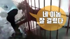 [자막뉴스] 호랑이 앞 셀카 찍다 '황천길 갔다 왔다'