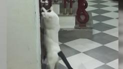화장실에 갇힌 동료 구해준 고양이