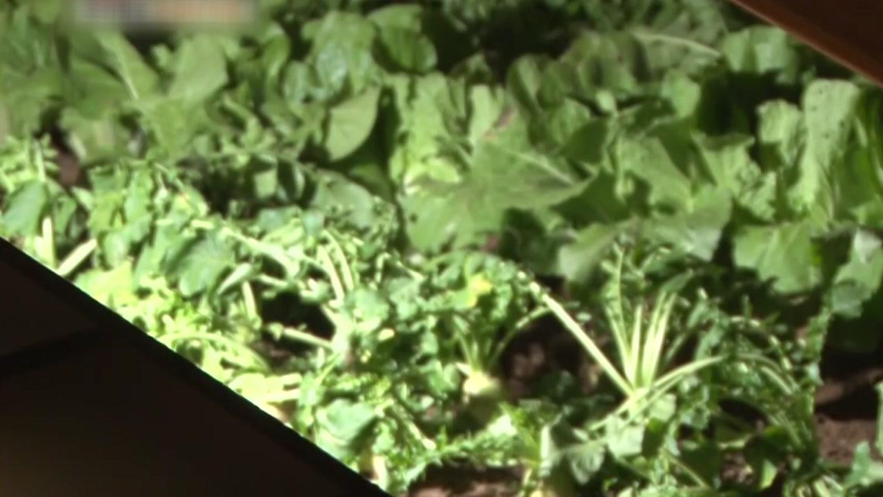 과거 한겨울에도 채소를 재배할 수 있었던 이유