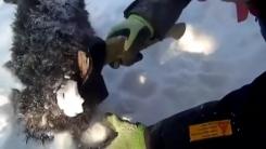 [영상] 손도끼를 이용한 '강아지 구출 작전'