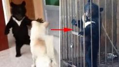 멸종위기 반달곰을 강아지로 착각해 3년 키운 中 남성
