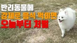 [자막뉴스] 동물학대 처벌, 오늘부터 이렇게 달라진다