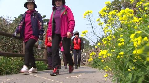 봄기운 가득한 제주…유채꽃 걷기 대회 열려