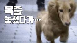 [자막뉴스] 강아지 목줄 놓쳤다가 '1억 3천만 원 배상'