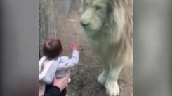 [지구촌생생영상] 아이와 사자의 특별한 교감