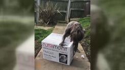 [지구촌생생영상] '내 눈엔 너만 보여'...사료 상자로 달려든 개