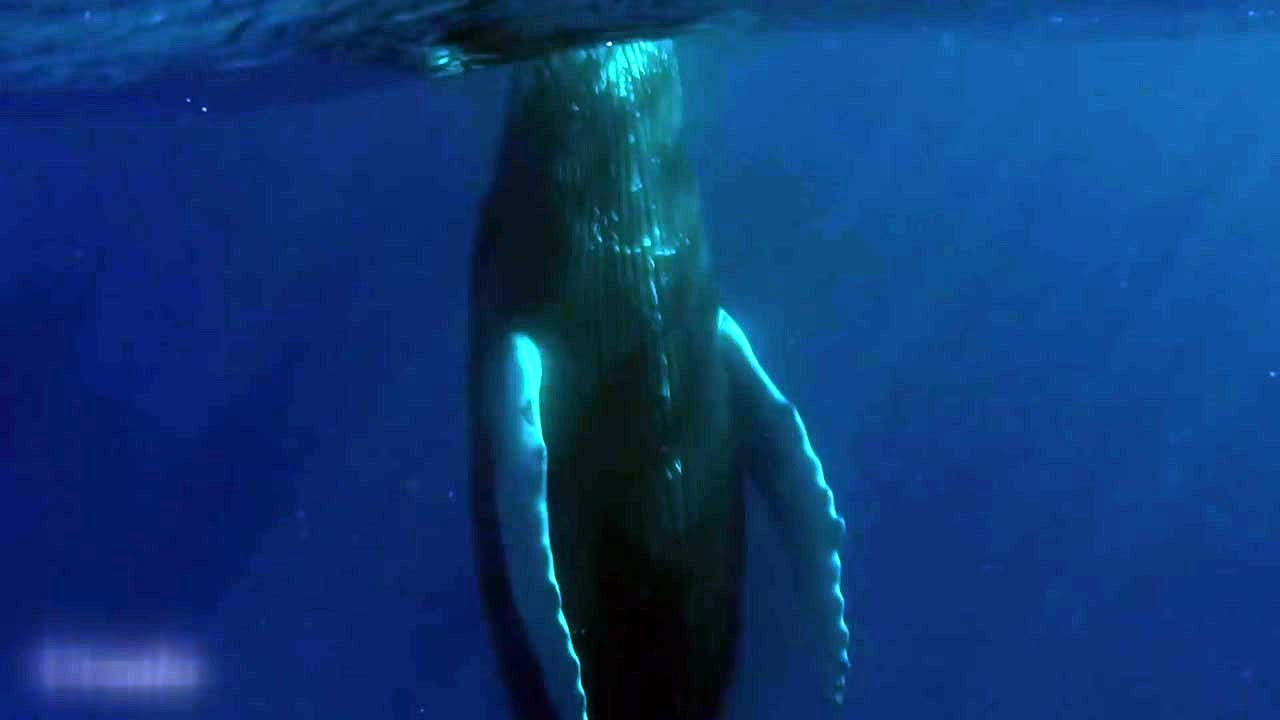 [지구촌생생영상] '올라갔다 내려갔다' 선 채로 잠자는 고래