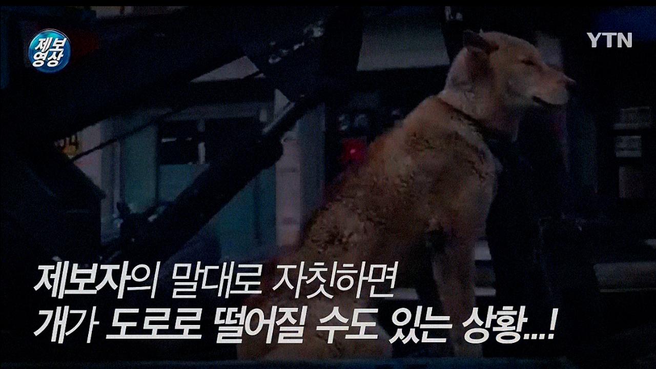 [영상] 레커차 뒤 칸에 개 묶어두고 질주···'위험천만'