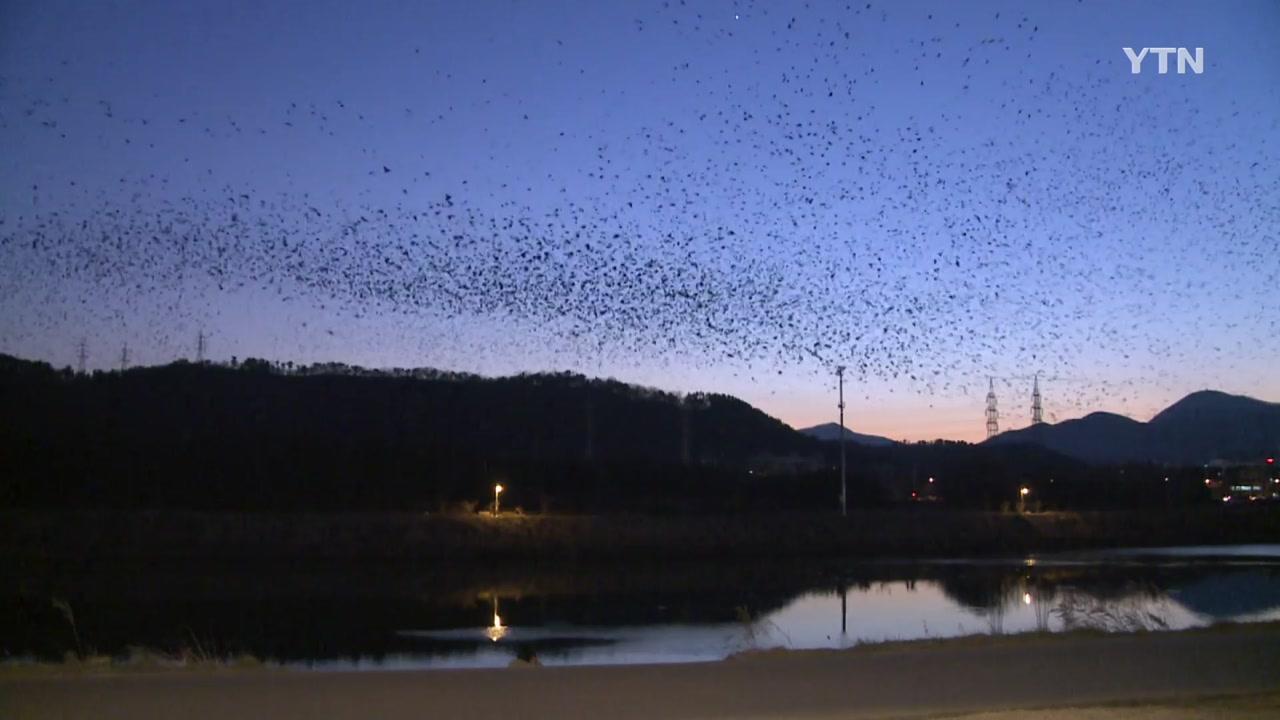 태화강 철새 종류 다양해져...21종류 증가