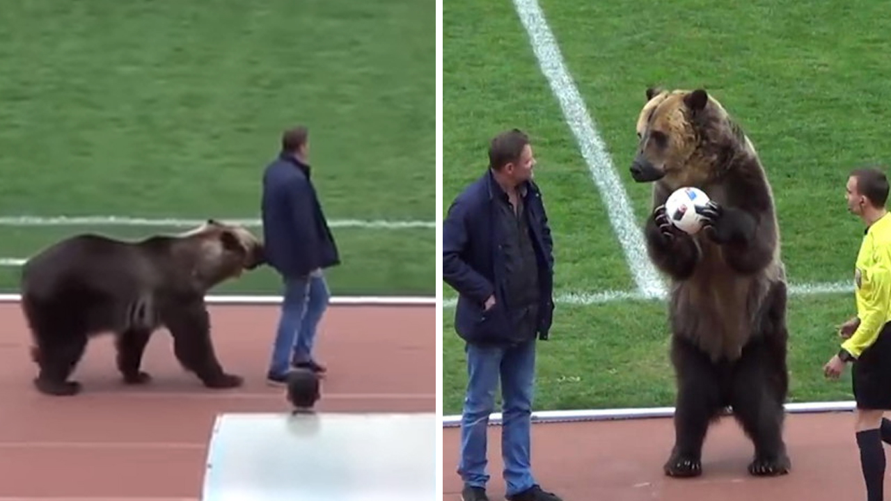 축구 경기 도중 등장해 묘기 부린 곰... 동물단체 반발