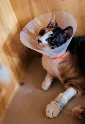 남성 유튜버에게 학대당한 고양이, 갈비뼈 부러졌었다