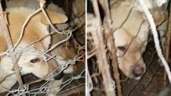 잃어버렸던 반려견 두 마리, 트럭 철창에 갇힌 채 발견