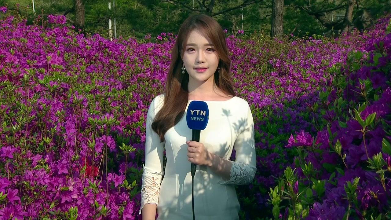[날씨] 내일도 완연한 봄, 공기 깨끗...만발한 철쭉 동산