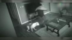 도둑 쫓아내고 주인 지켜낸 대형견의 용기