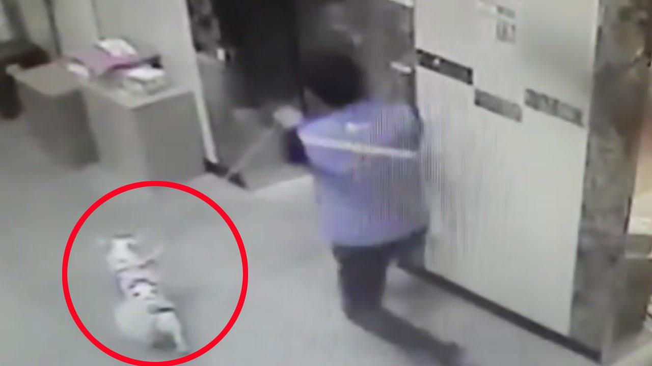 [영상] 몸 던져 강아지 살린 택배기사의 순발력