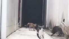 막다른 곳에 몰린 고양이의 절묘한 탈출법