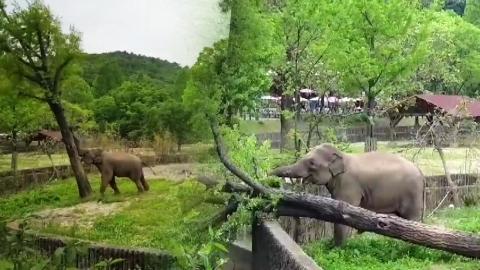 """[영상] """"배고프면 힘 세져요"""" 코끼리 힘자랑"""