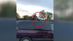 달리는 차 위에 고양이 '무슨 사정이?'