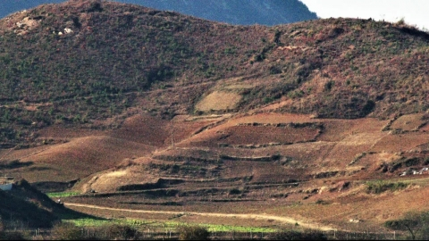 잡초만 무성한 북한 산림…황폐화 심각