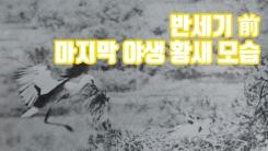 [자막뉴스] 반세기 前 마지막 야생 황새 모습 공개