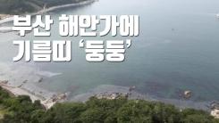 [자막뉴스] 부산 해안가에 기름띠 '둥둥'