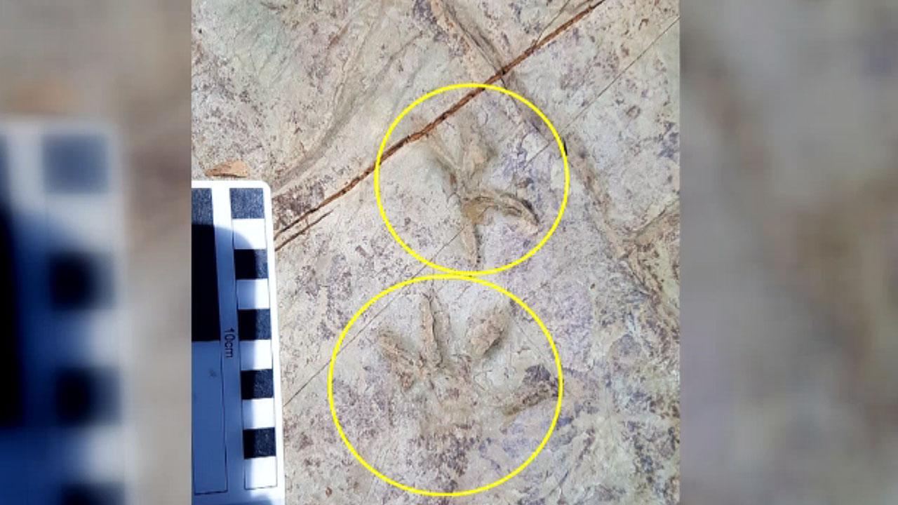 신종 4족 보행 척추동물 발자국 화석 발견