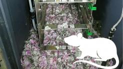 현금인출기 속 생쥐떼, 2,000만원 어치 지폐 갉아 먹어..