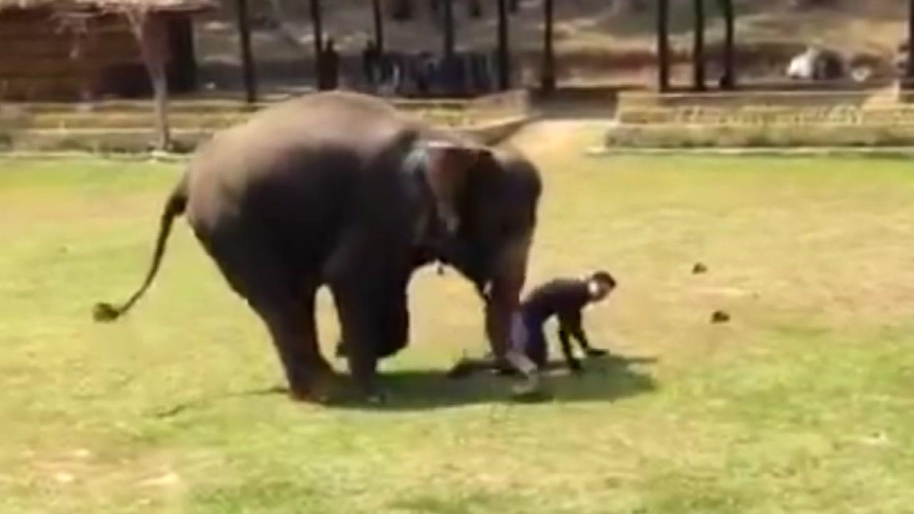 """""""사육사는 내가 지킨다""""...코끼리의 의리"""