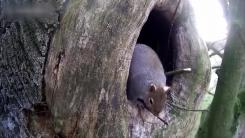 '오늘부터 우리 집'...올빼미 내쫓은 뻔뻔한 다람쥐
