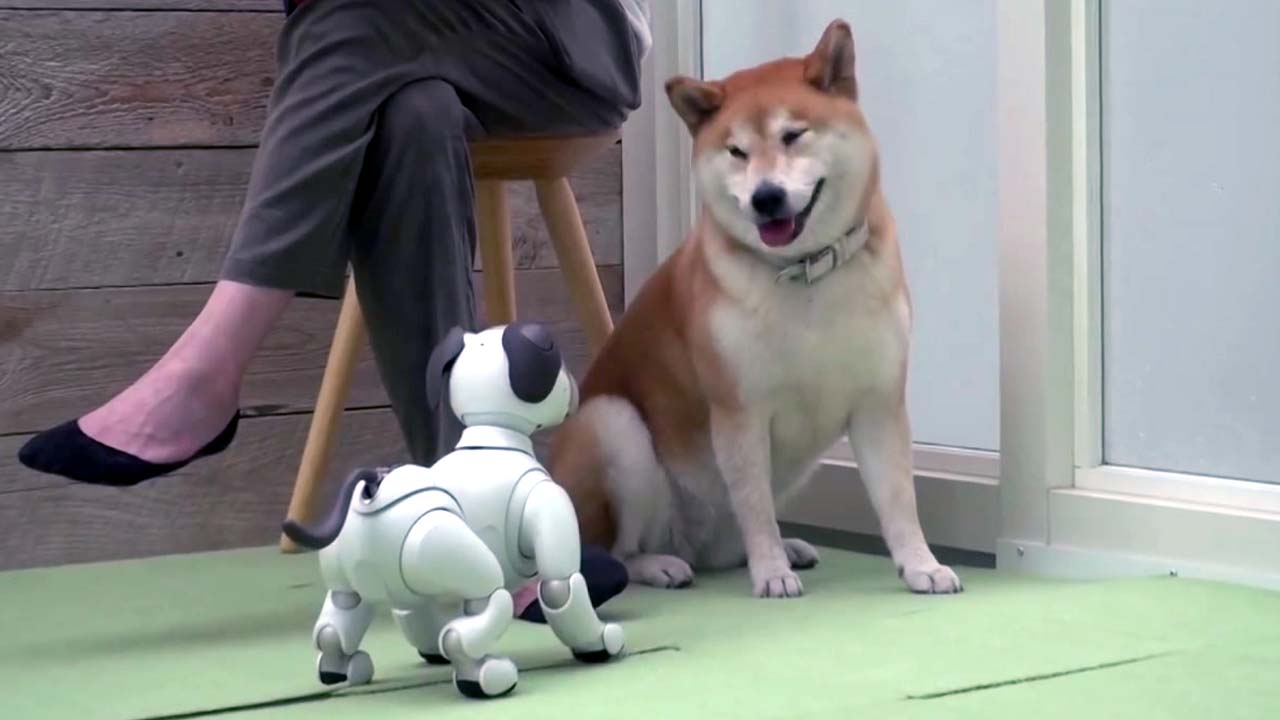 개와 인공지능 로봇 공동생활의 '놀라운 결과'
